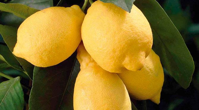 Eureka-Lemon