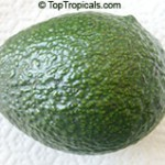 Poncho Avocado