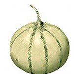 American Cantaloupe Melon
