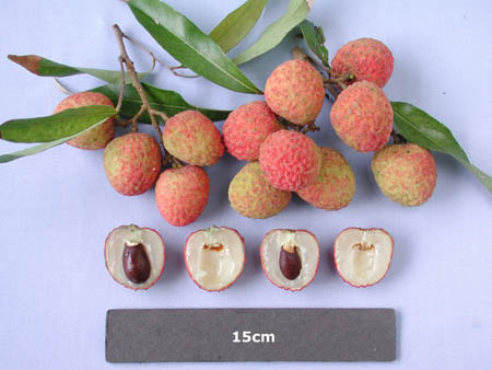 how to eat lychee seeds