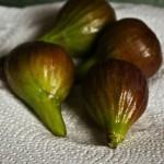 Smyrna Fig