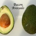 Bacon Avocado